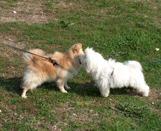 L' ordinanza sui cani 2004